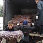 Волонтёры оказали помощь общественным организациям города в разгрузке картофеля.